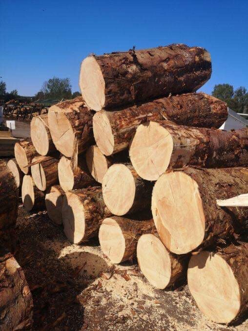 Sitka Spruce Competition Logs